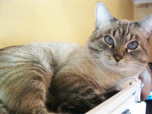 Папа тайский кот ch водевиль музыка